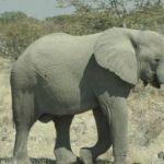 Namibia009